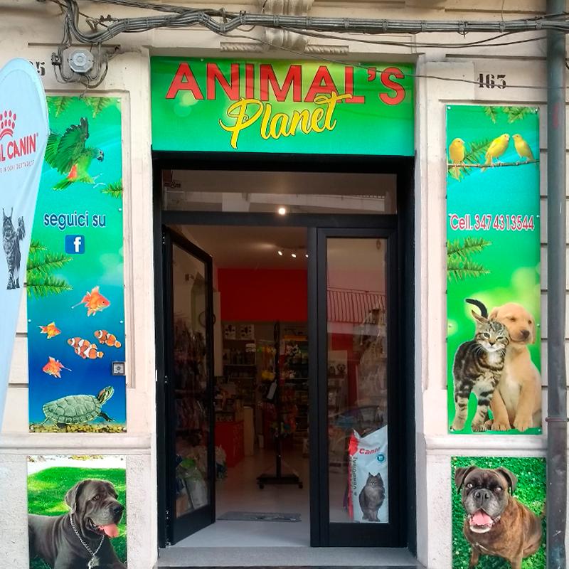 Animal's planet image
